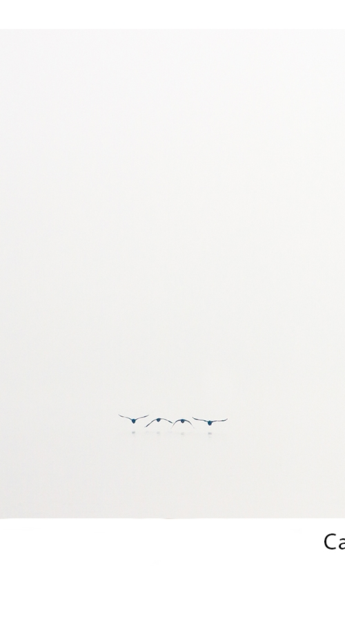 Ptice Sasa MALEZIC