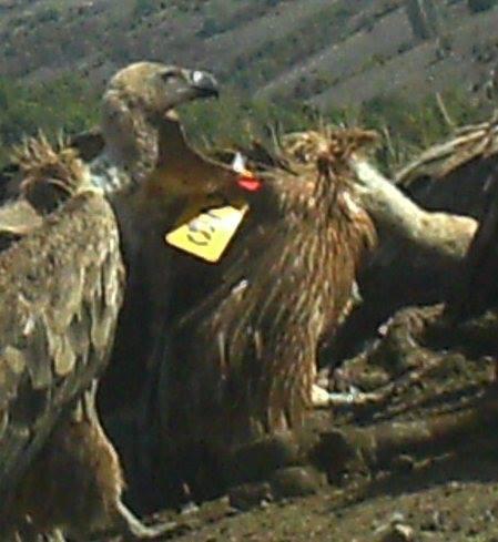 Ime: TUTA. Krilni marker br. 26.  / Name: TUTA . Wing marker no.  26.