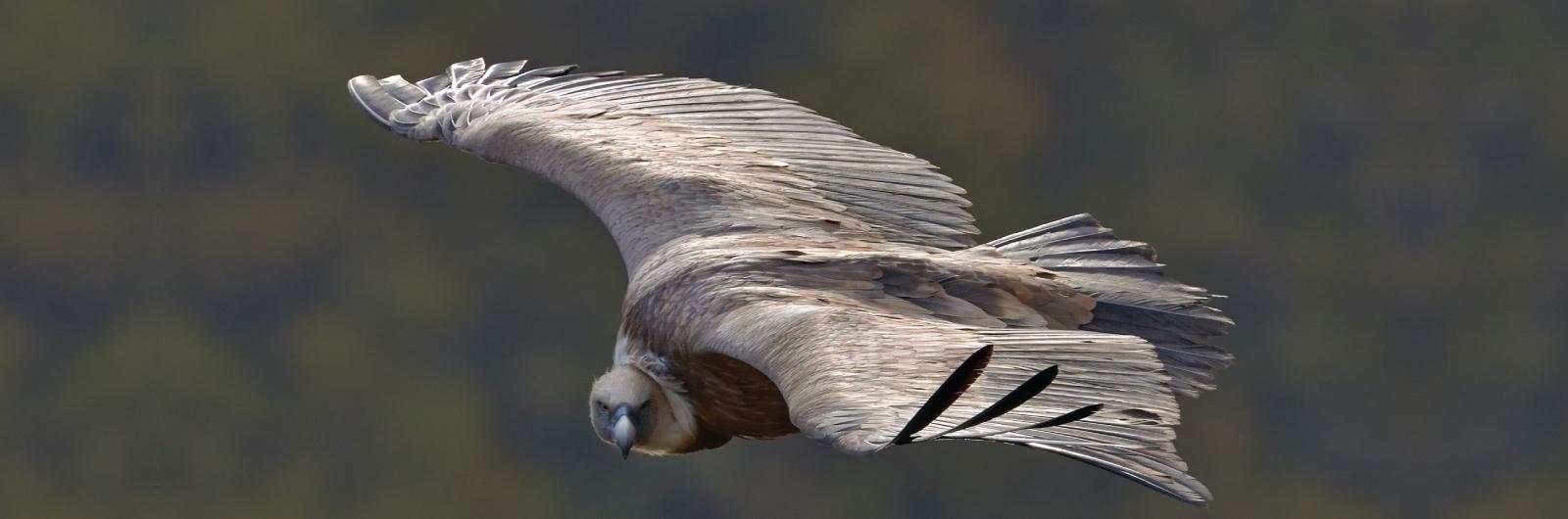 Fondacija za zaštitu ptica grabljivica