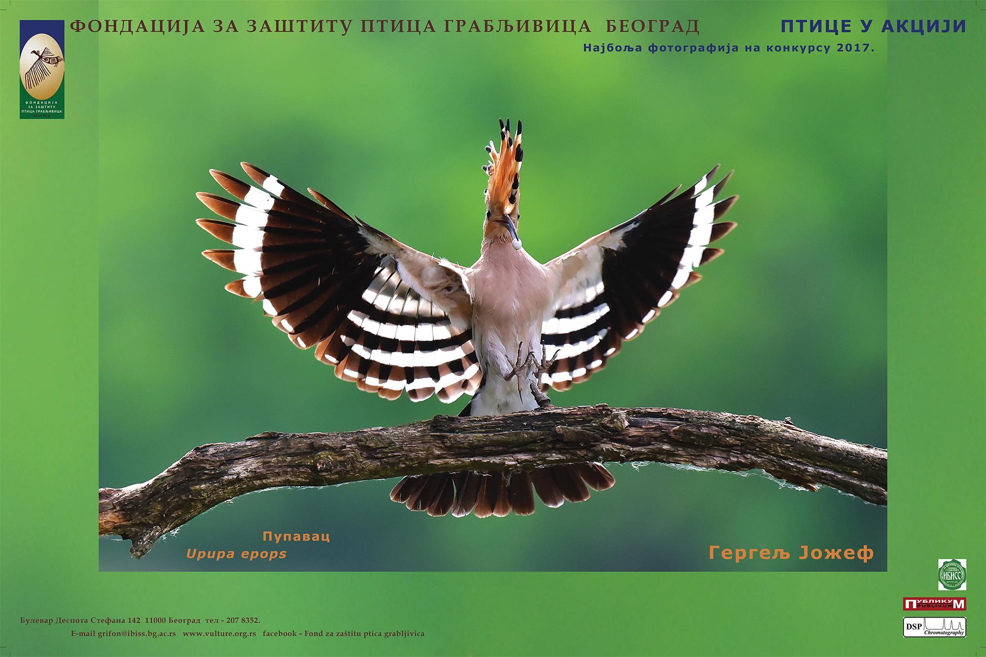 Ptice u akciji